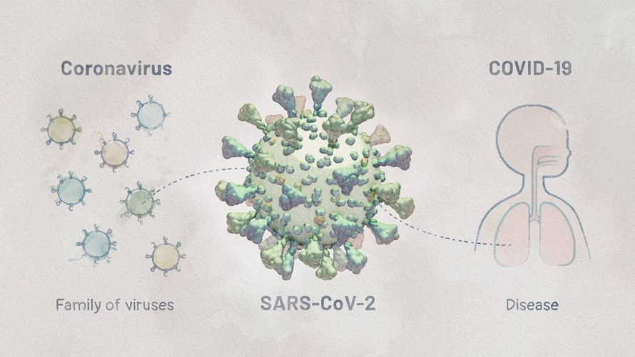 Biology of SARS-CoV-2: Infection | HHMI BioInteractive Video