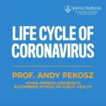 Life Cycle of the Coronavirus